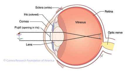 crosssection-of-eye-co-works.jpg